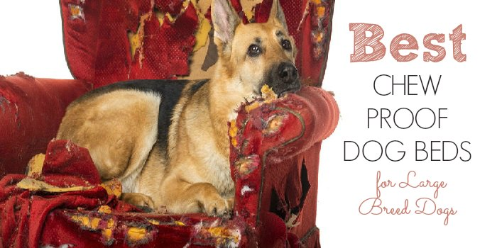 Best Chew-Proof Dog Beds for Large-Breed Dogs