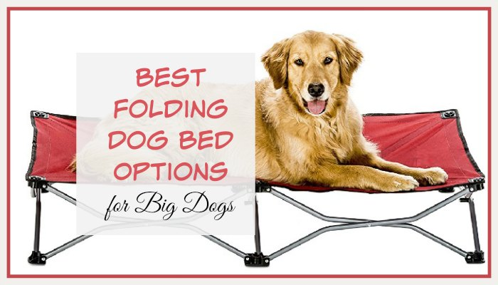 Best Folding Dog Bed Options for Big Dogs