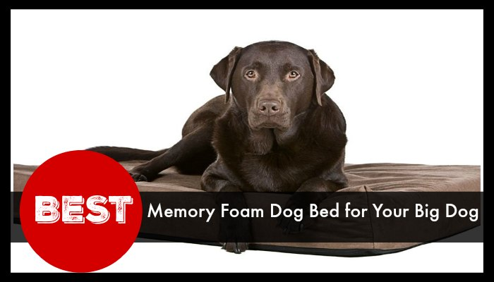 Best Memory Foam Dog Bed for Your Big Dog