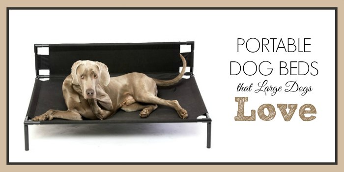 Portable Dog Beds that Large Dogs Love