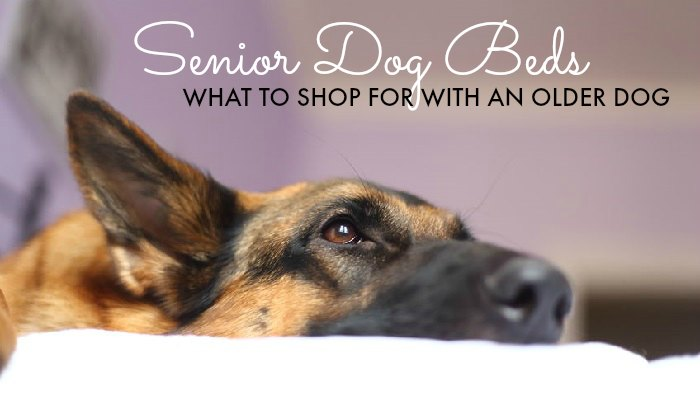Senior Dog Beds – What to Shop for with an Older Dog