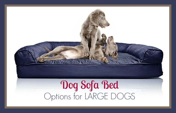 Dog Sofa Bed Options For Large Dogs That We Highly Recommend