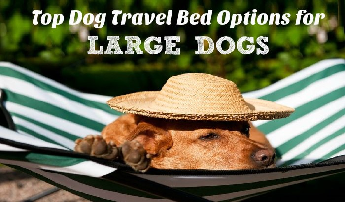 Top Dog Travel Bed Options for Large Dogs