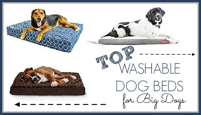 Washable Dog Beds For Big Dogs Top Choices For Large Breeds