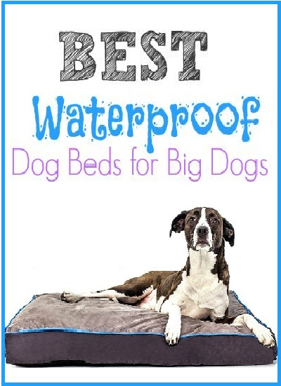 Favorite Waterproof Dog Beds for Large Dogs