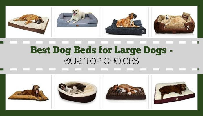 Best Dog Beds for Large Dogs - Our Top Choices