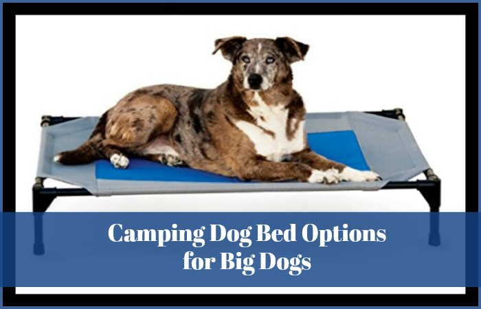 Camping Dog Bed Options for Big Dogs