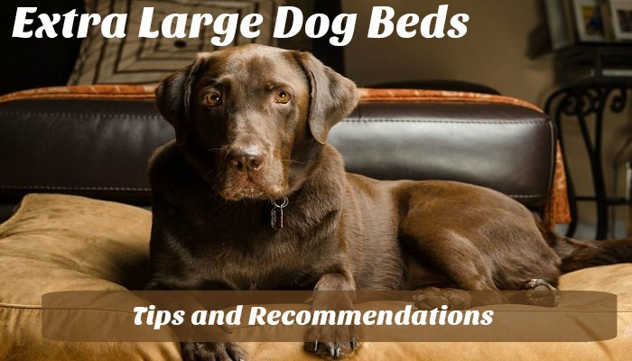 Extra Large Dog Beds – Tips and Recommendations
