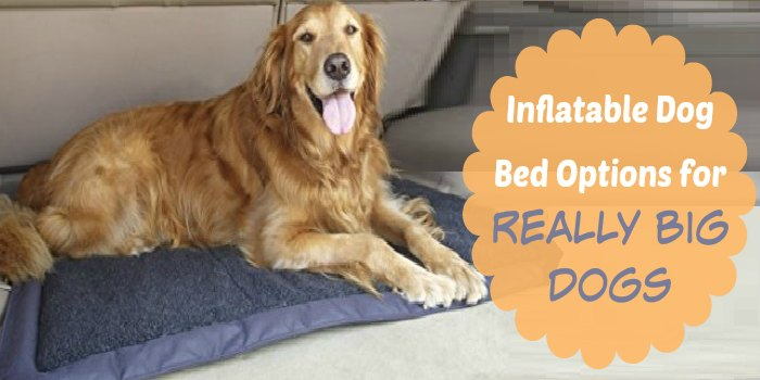 Inflatable Dog Bed Options for Really Big Dogs