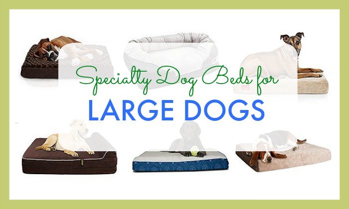 Specialty Dog Beds for Large Dogs
